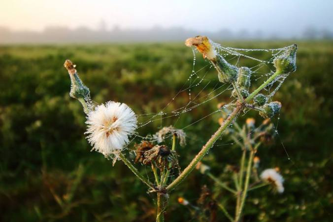 matthew-spidersilk2