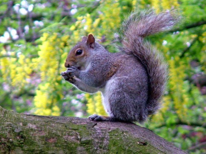 autumn-squirrel-eating.jpg