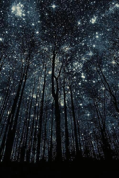 stars in the wood